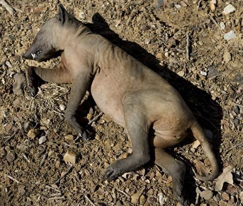 The North Central Texas Goat Sucker? [Photo: Joe Duty]