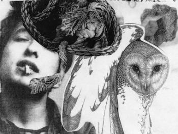 OWLS A LOT