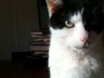 CAT THE CAT IS JUDGING AND A LITTLE CONCERNED