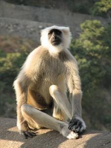 That's a monkey