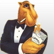 THAT CAMEL SURE LOVES SMOKING!!!