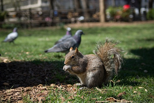 Soon you'll be able to eat INDOORS, Union Square squirrel!