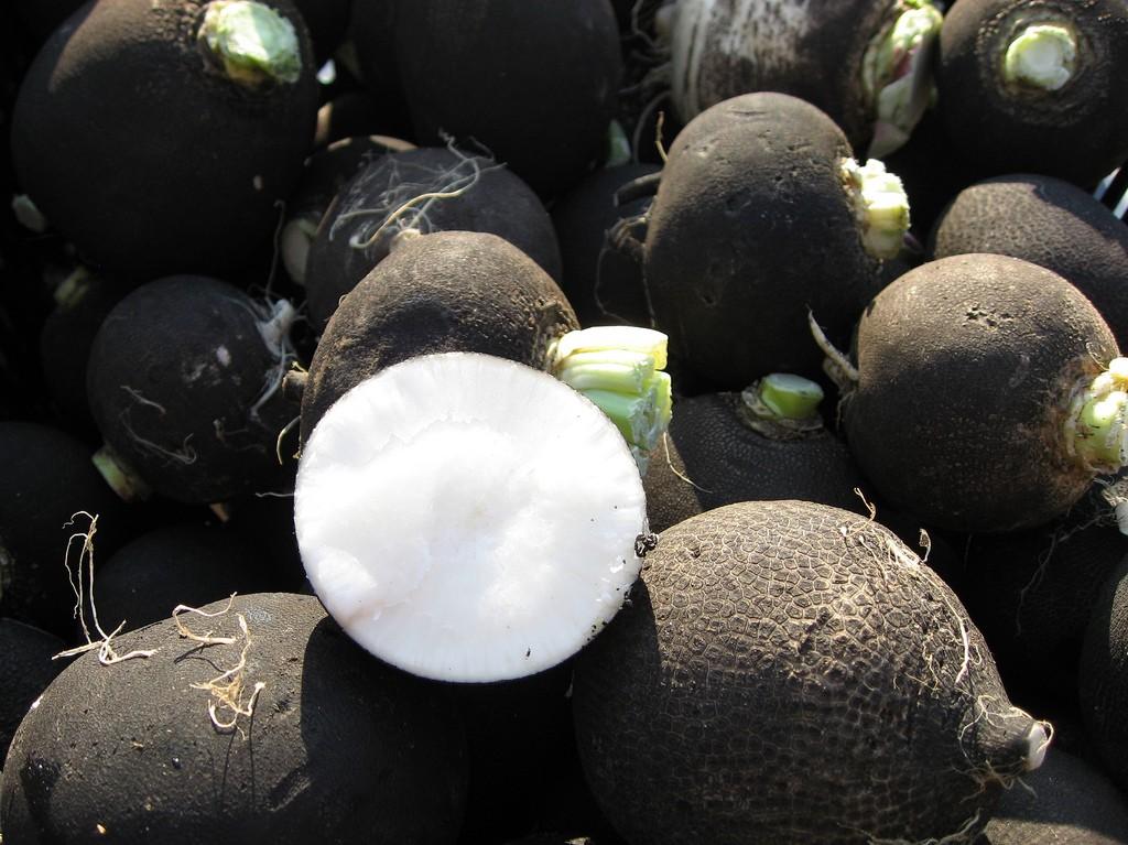black radishes dang